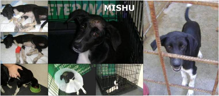 Mishu pre-adoption