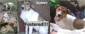 Sunny will be going into foster care in Austria