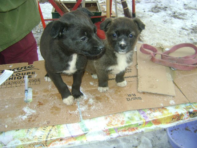 Shelter puppies who now have a chance for life thanks to vaccination