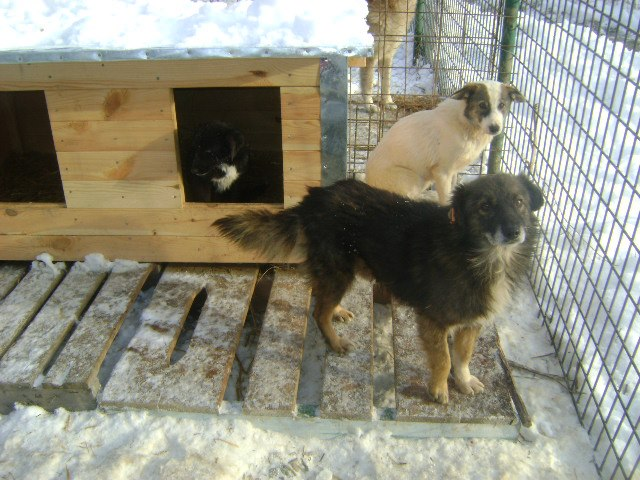 New dog houses to provide shelter from the cold