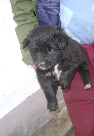 One of the recently abandoned puppies needing vaccinating