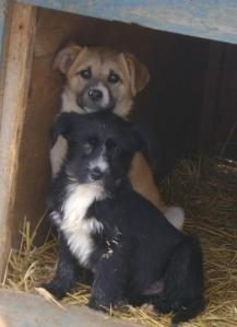 Puppies in the shelter