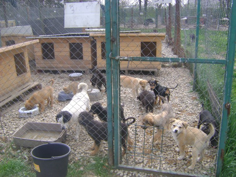 Stray dogs and puppies in the shelter - help us provide better conditions for them