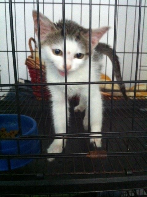 Our latest kitten rescue - can you help find her a good home and give her a story like Ninja's?