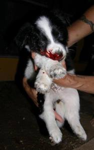Puppy beaten to death for being a stray
