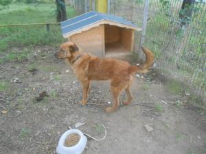Odin recovered in the Romanian shelter