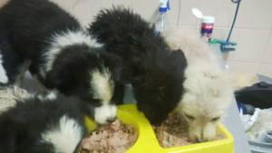 Puppies getting food at the vets
