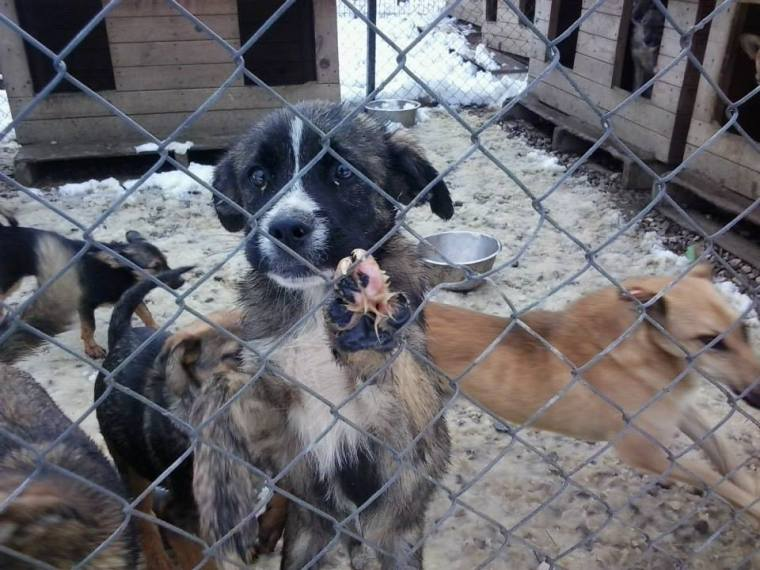 Help us give dogs a better option than the misery of the public shelter