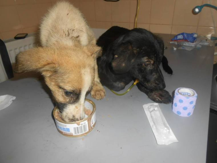 Two particularly weak puppies receiving special food to try to build them up