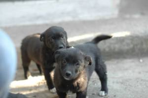 Rescued puppies vaccinated and waiting for homes