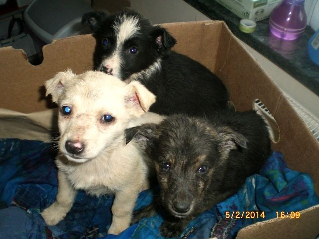 Abandonned in a box at the shelter - we could not abandon them to their fate - can you?