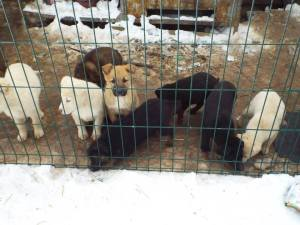 Puppies born into snow, cold and hunger