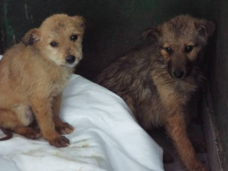 Can you  sponsor us so that we have a hope of survival back in the main shelter?