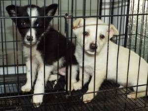 Two of three puppies abadonned at the shelter & taken to the vet by us