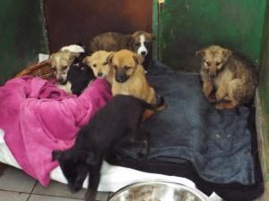 Survivors from the shelter in one of indoor kennels.  They are still cold and scared and need help