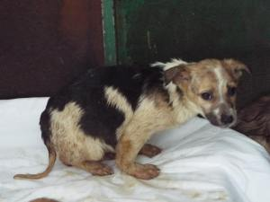 This weak puppy stands no chance in the outdoor shelter - will you give it a chance?