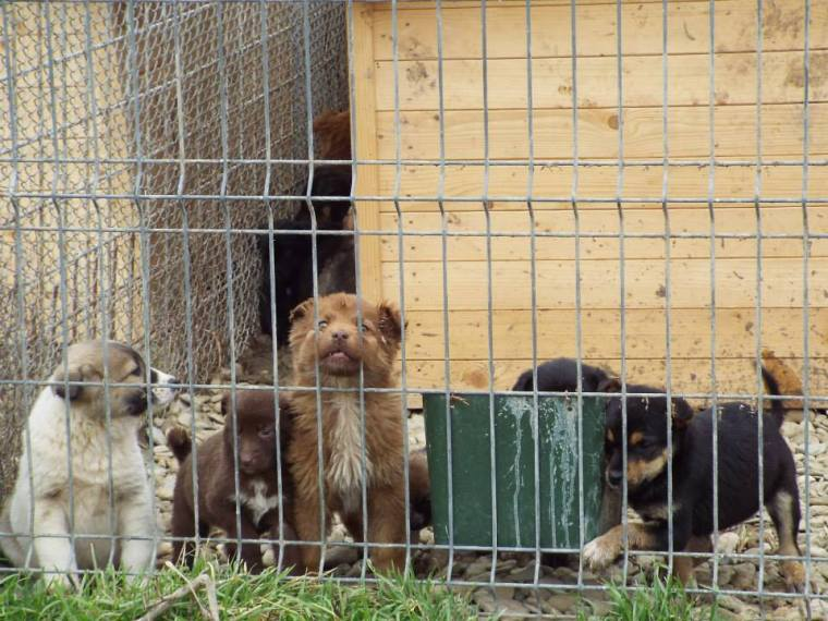 Puppies in the puppy enclosure - safe from larger adult dogs