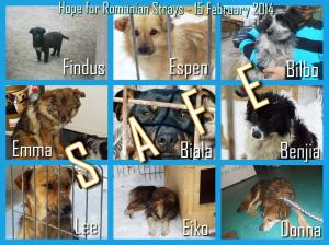 Just a few of the dogs we've found homes for