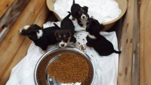 Dumped puppies with food and shelter at the shelter