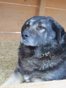 Big softy Franz is needs a home - he is so unhappy in the shelter
