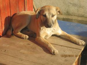 Tiger who urgently needs a home
