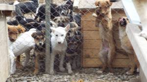 Puppies in the puppy pen funded by Hope for Romanian Strays