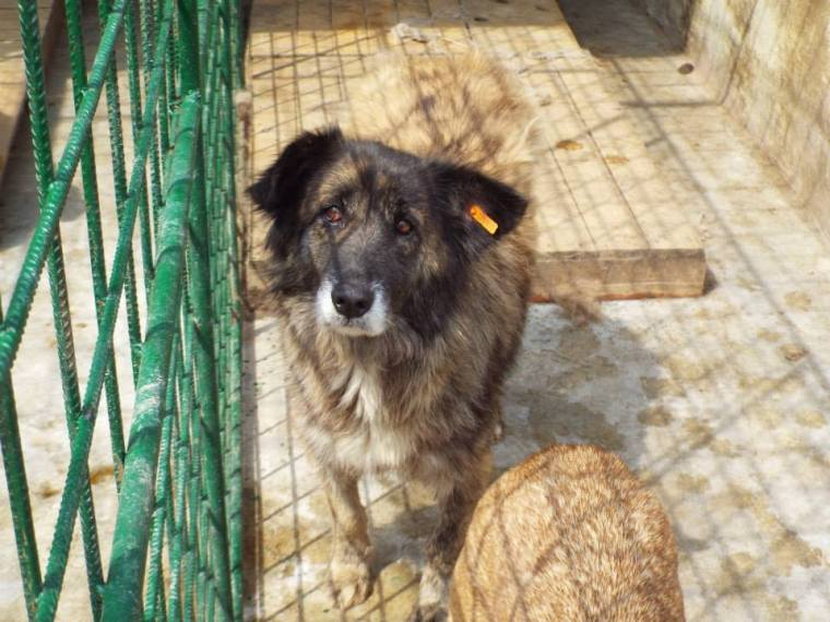 One of the new arrivals - old and with a poorly eye his hopes of survival are low unless he is found a home