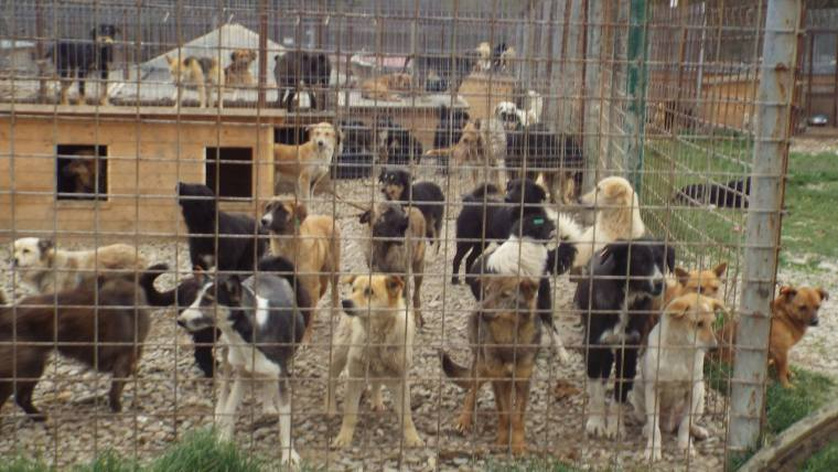 Dogs in the overcrowded shelter hoping for a better life
