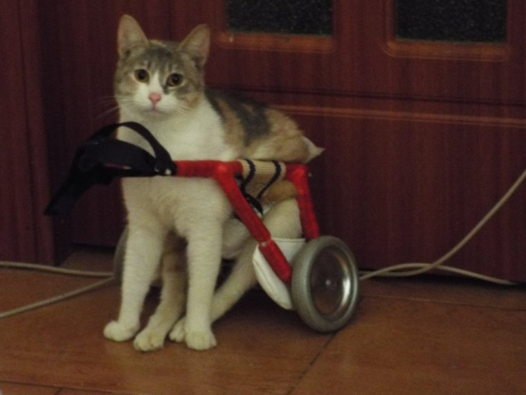 Sophie with her new set of wheels