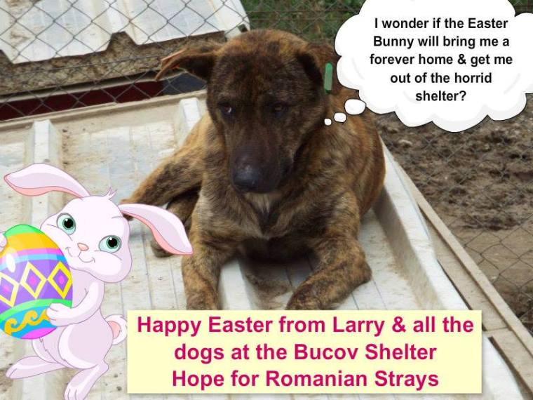 Larry's Easter Campaign - which got no responses :(