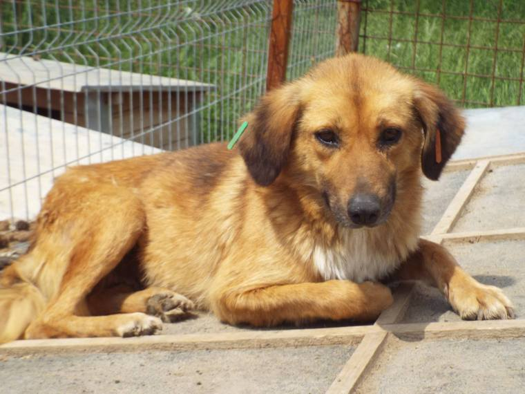 Sue - another dog waiting for months for a home