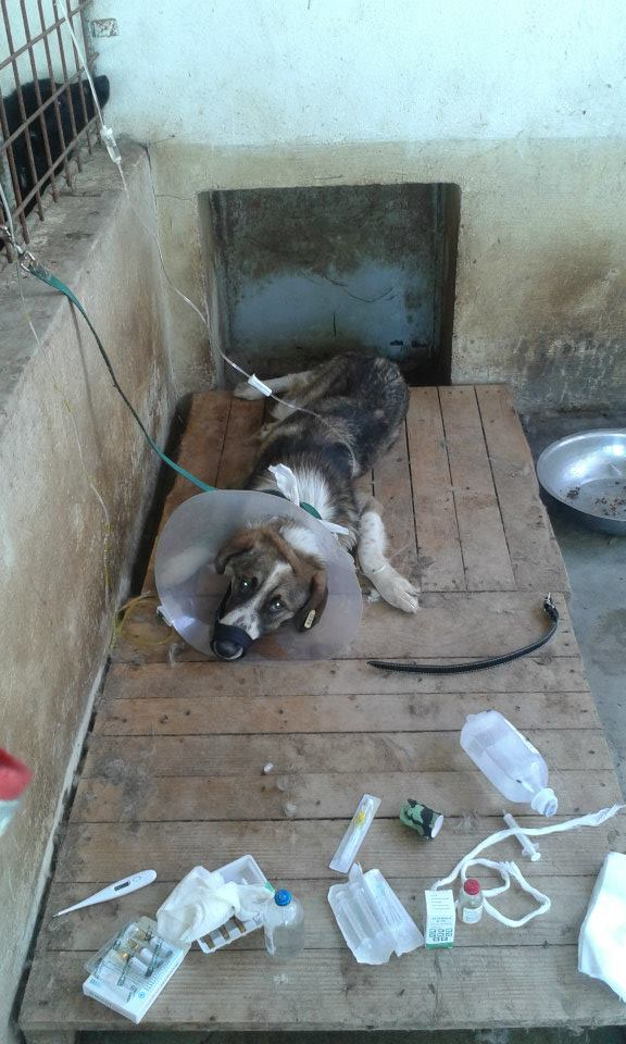 Sadly another very sick and emaciated dog close to death