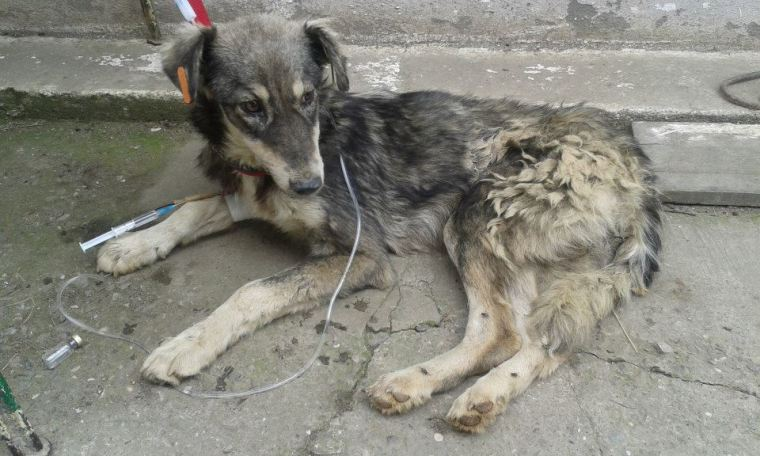 "One of the ""lucky"" Romanian strays in that he ended up in Aniela's care"