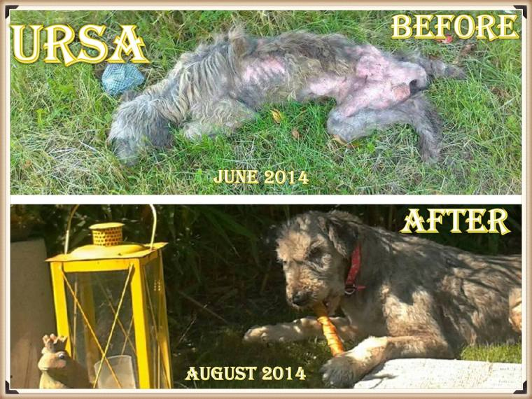 Ursa - then and now
