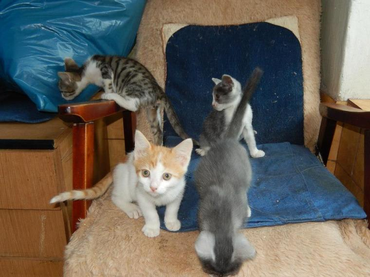 Sylvia's foster kittens ... looking for mischief!