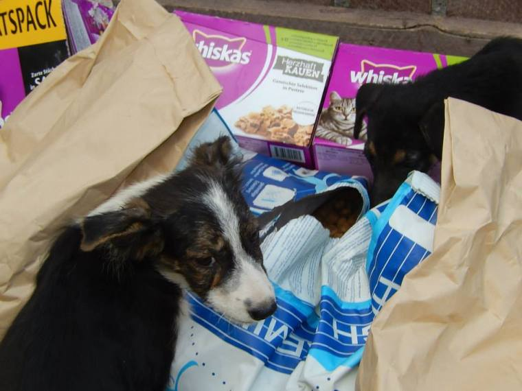 Puppies checking out donated food