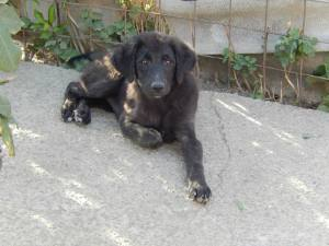 One of Octavia's pups waiting for a forever home