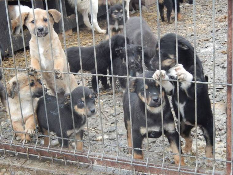 Wet, cold & hungry puppies in the shelter
