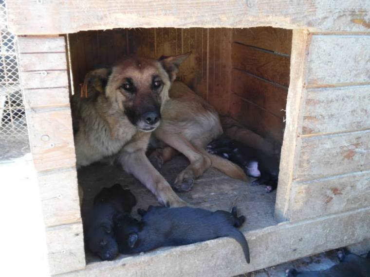 Mum with her new born pups - she wants her babies to survive and so do we.
