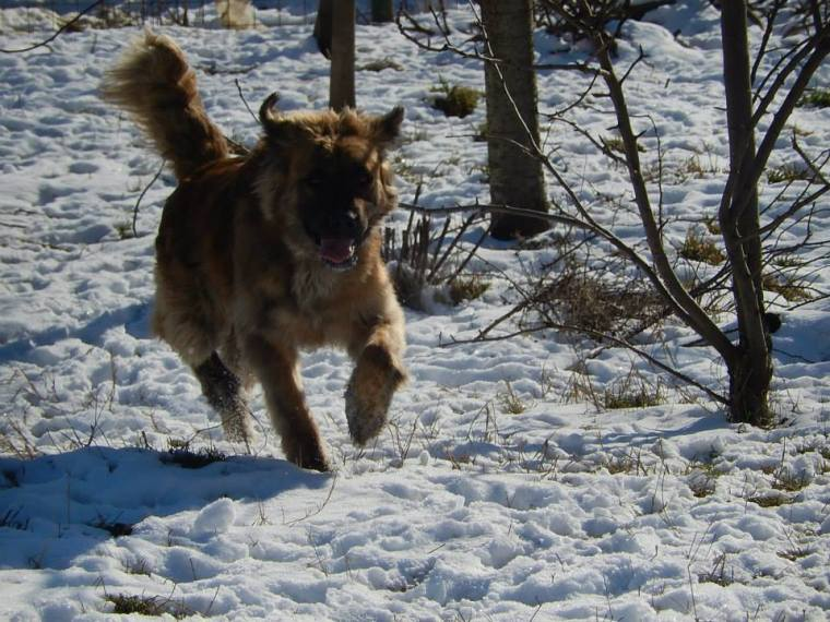 Oskar enjoying the freedom of running in the snow
