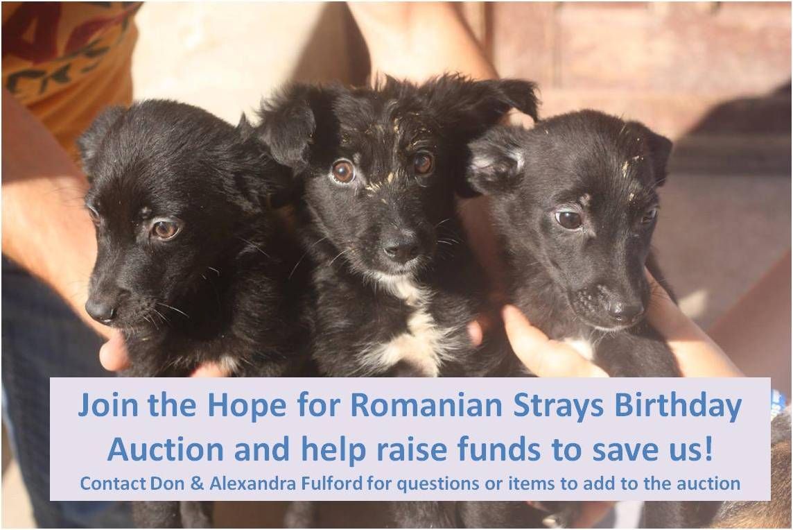 Christmas gifts for homeless dogs in romania